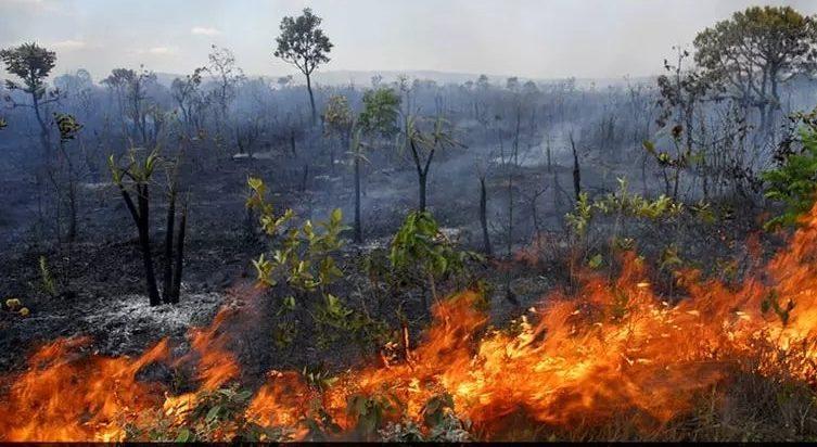 Queimadas na Amazônia provocam comoção mundial