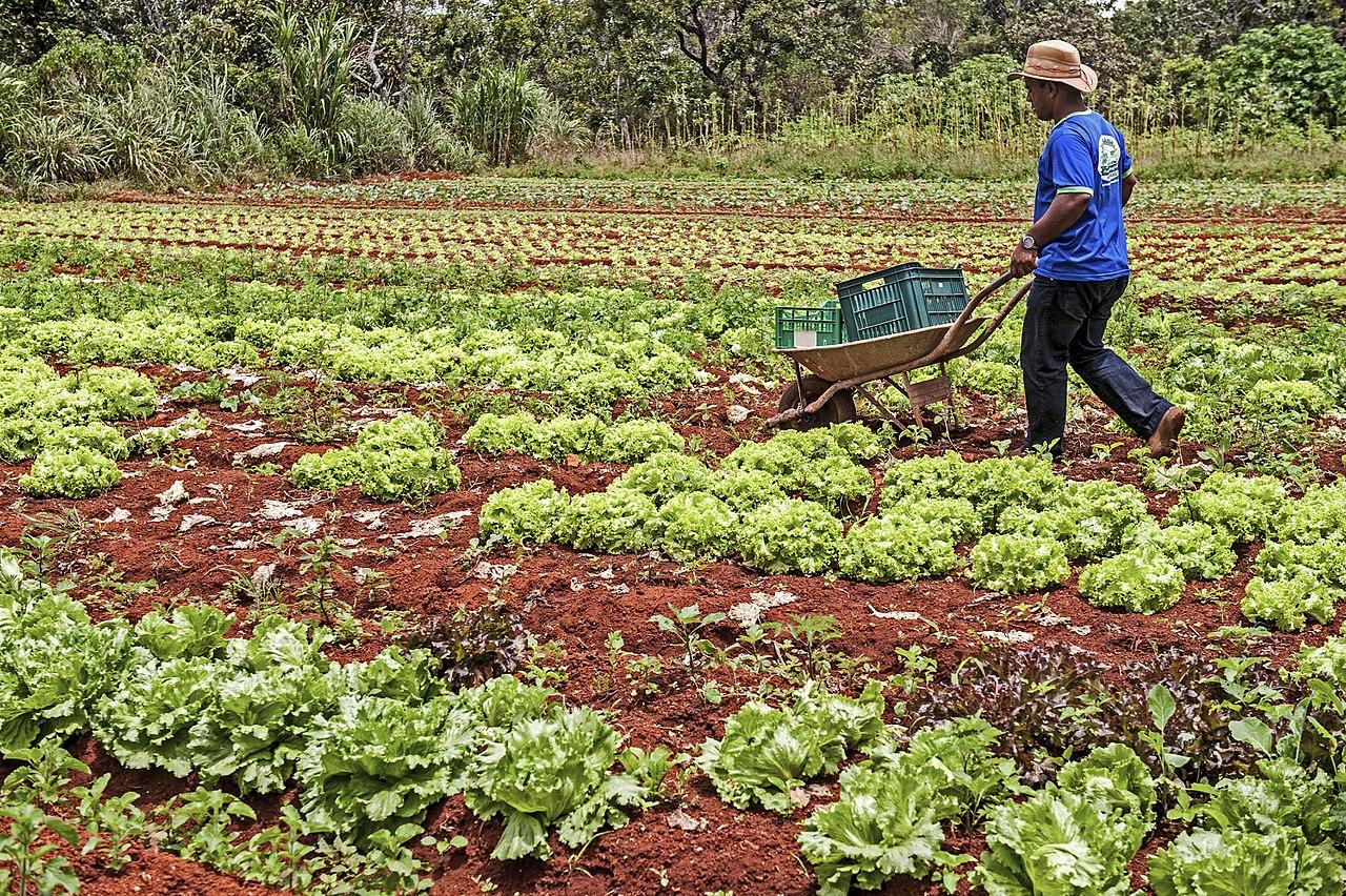 Agricultura orgânica e agroecologia: o veneno ainda está na mesa?