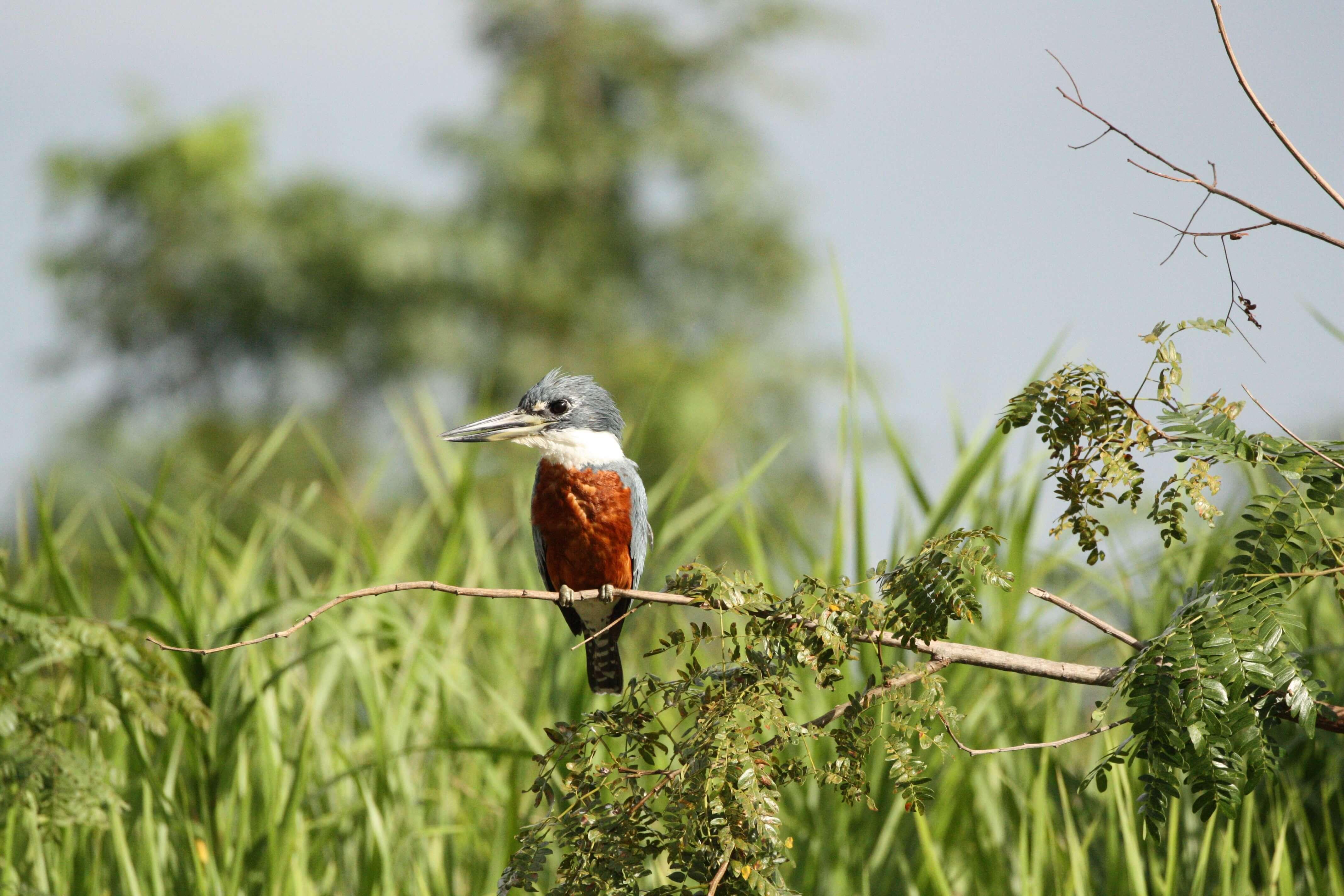 Pantanal: a previsão de uma nova catástrofe