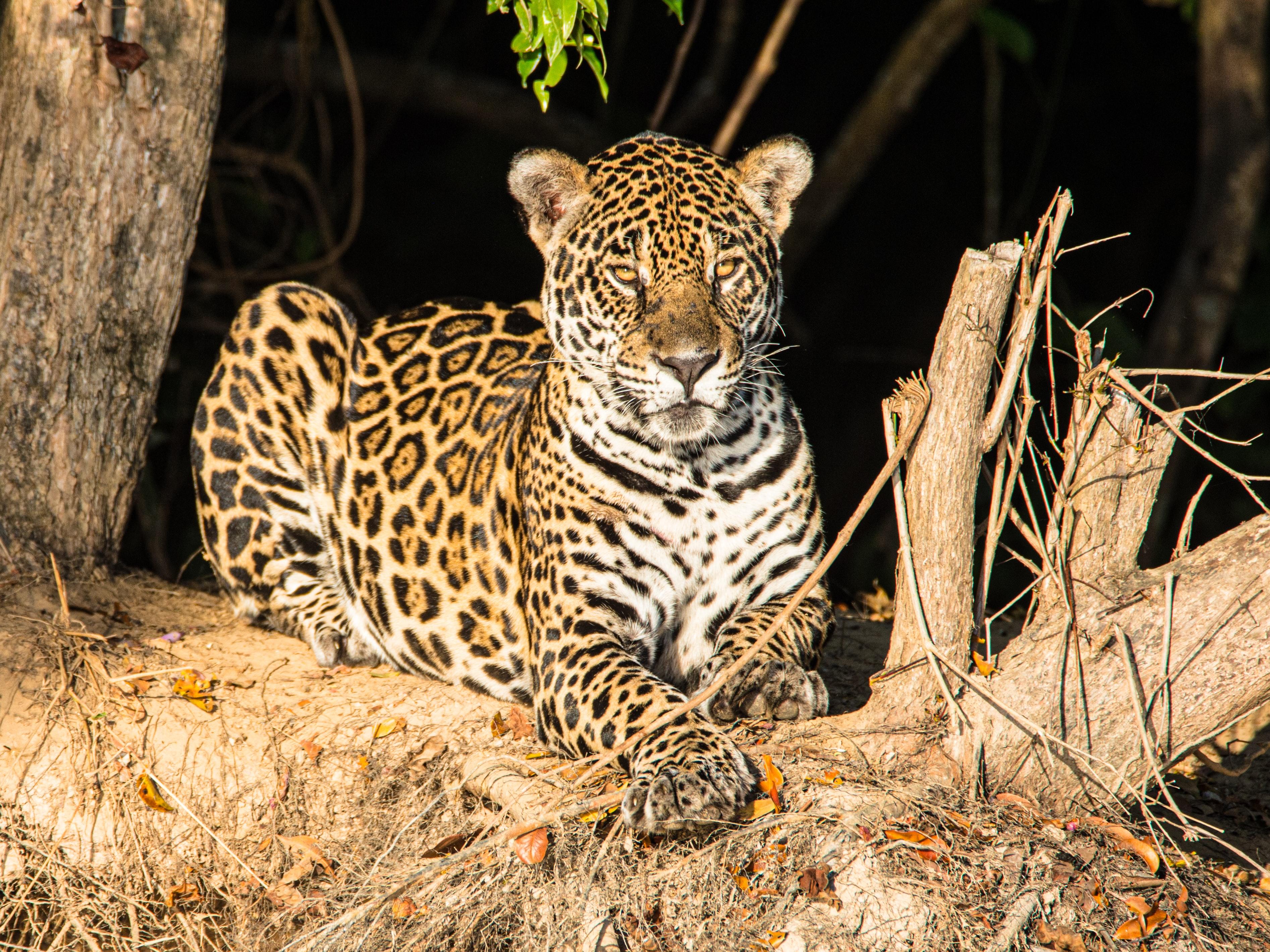 Mundo Green Podcast: Pantanal em Chamas