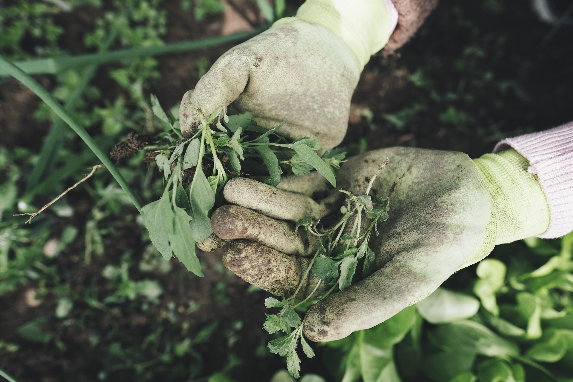 Mundo Green Podcast: Agroecologia